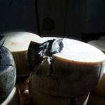 Parmigiano della Latteria Sociale Lora colpita dal terremoto in emilia